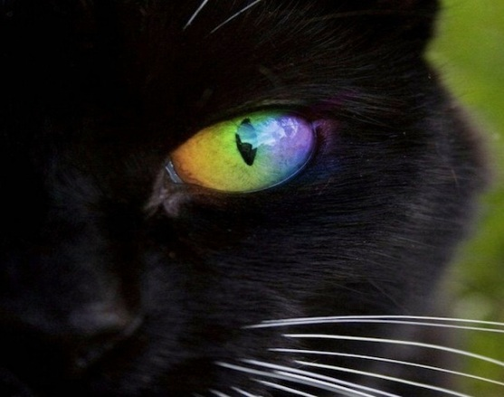 cat with rainbow eyes-2