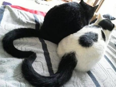 cats with love tail.jpeg