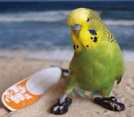 cute bird wearing flip flops