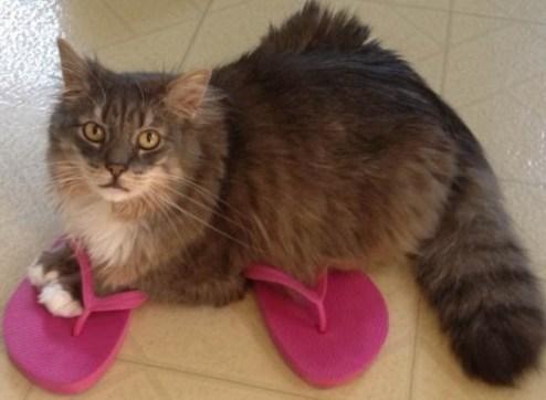 cute cat in flip flops