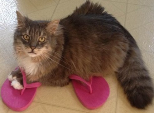 cute cat in flip flops
