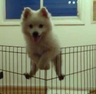 cute dog climb over fence