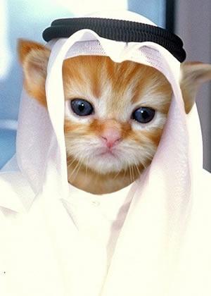 cute kitten sheikh.jpg