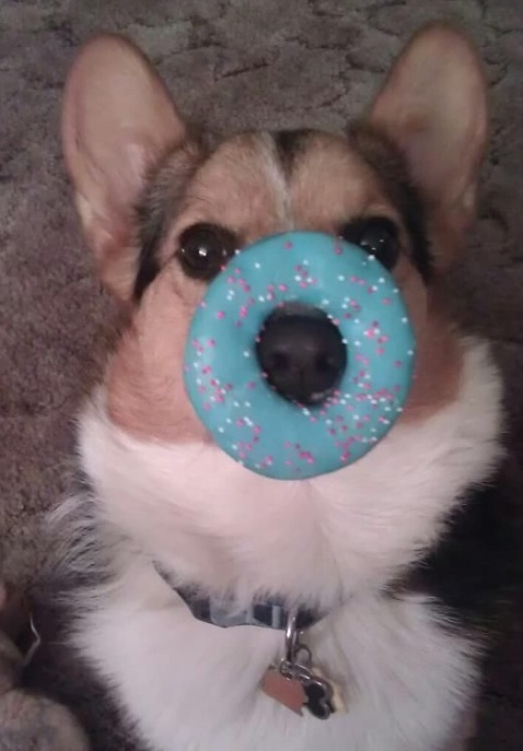 cute puppy with blue donut