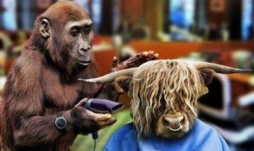 funny hair stylist