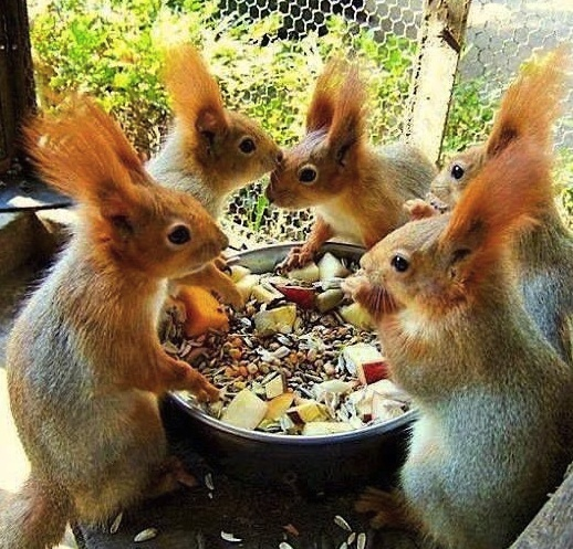 funny squirrels eating together