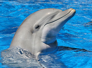 happy-smiling-dolphin