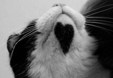 heart on the chin