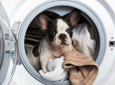 laundry-dog-new.jpg