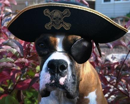 The-Pirate-Dog