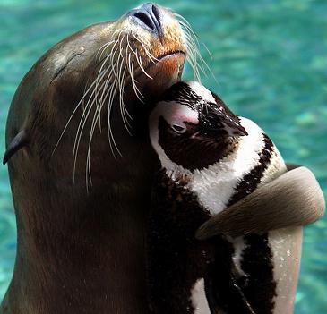 animal-hugs-5