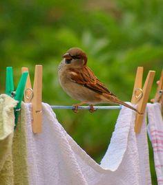 bird on clothes line.jpg