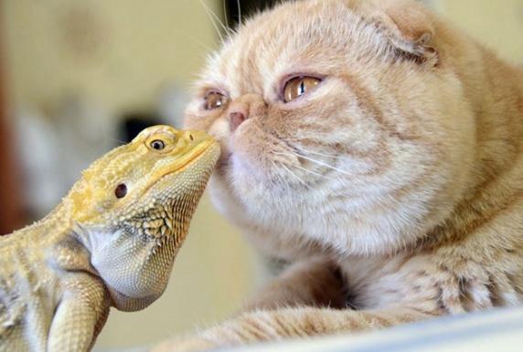 cat and iguana