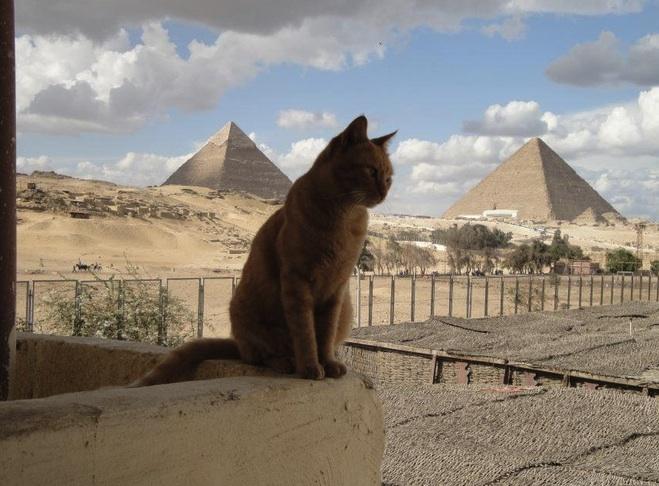 cat in egypt
