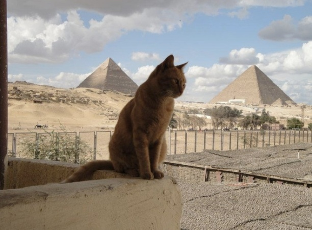 cat in egypt