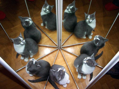 cat-reflections