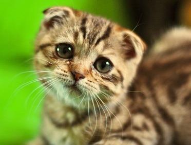 cat-sad-face