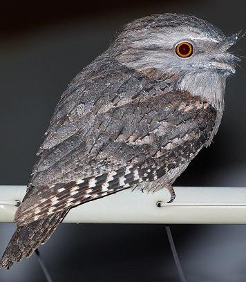 cute bird on line