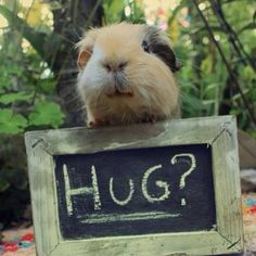 cute hamster with hug sign
