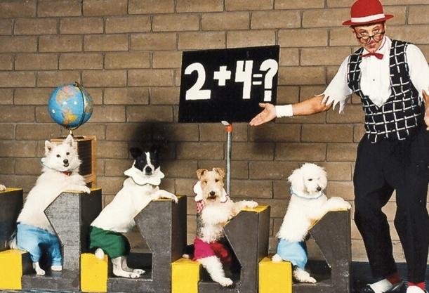doggie classroom