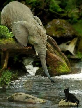 elephant saving kitten