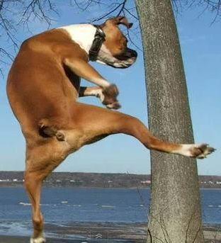 funny dog high kick
