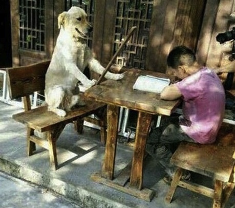 funny dog strict teacher