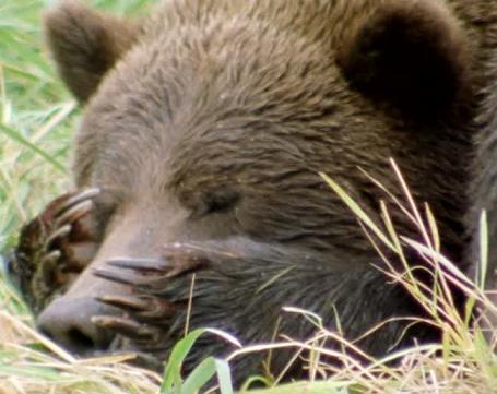 funny - unbearable