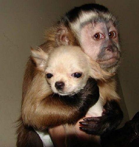 monkey hugging puppy
