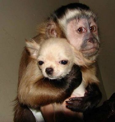 monkey hugging puppy
