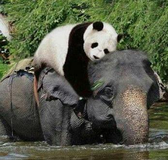 panda hugging elephant