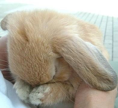 sad bunny