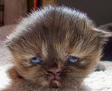 sad cat -2