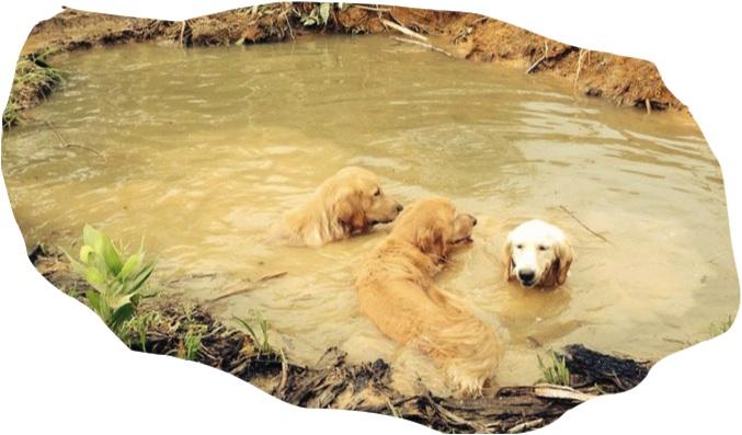 3 muddy buddies