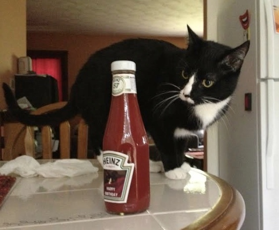 cat and ketchup 2.jpg
