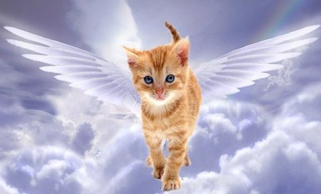 cat angel