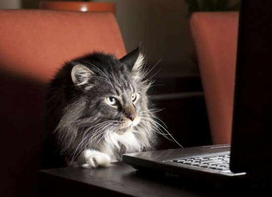 cat on computer