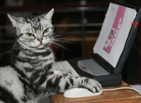 cat on computer2