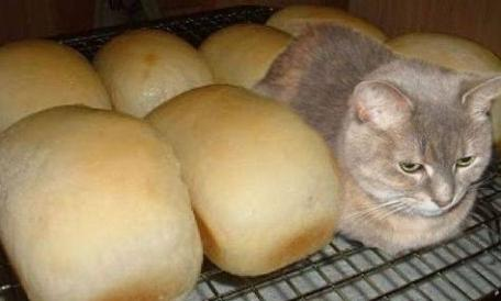 cat with loaves of bread