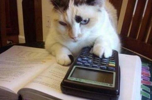 cat-working-1.jpg