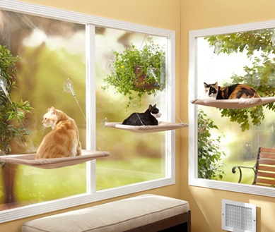 cats on window sill