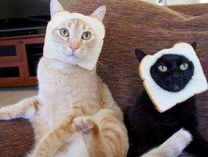 cats with bread