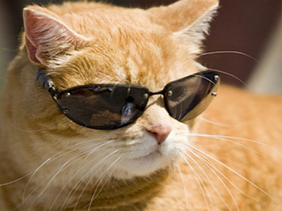 cool cat in shades