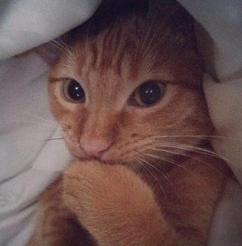 cute cat keeping it a secret