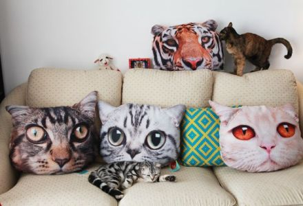 cute cat with cat pillows.jpg