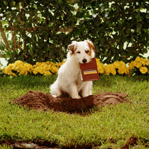 cute dog landscaping