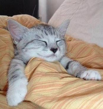 cute kitten sleeping in bed