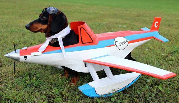 darshund pilot