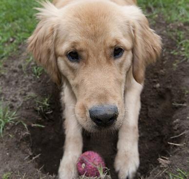 dog burying toy