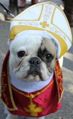 dog priest